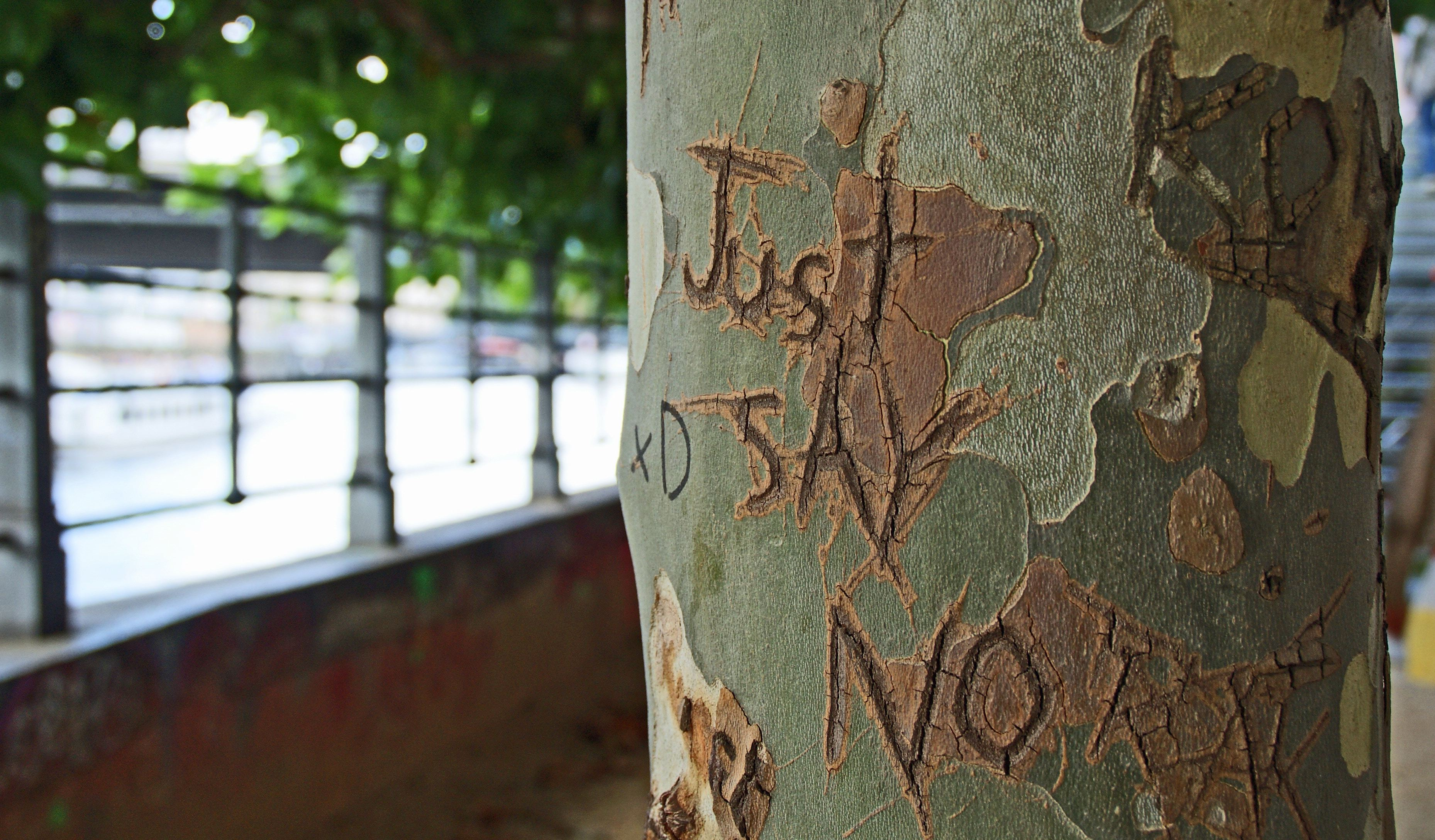 Just say no, carved on a tree